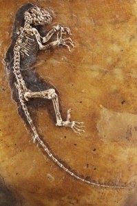 ida-missing-link-fossil-i-004